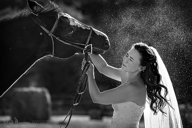 bride+horse